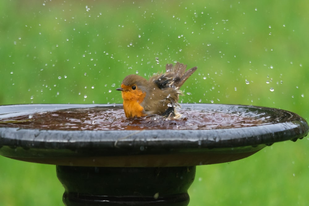 Bird Bath in Garden