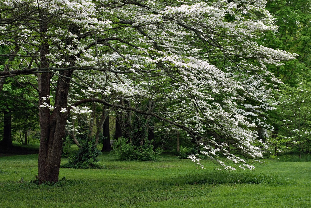 6 Stunning Florida Trees With White Flowers Go Get Em Lawn Services
