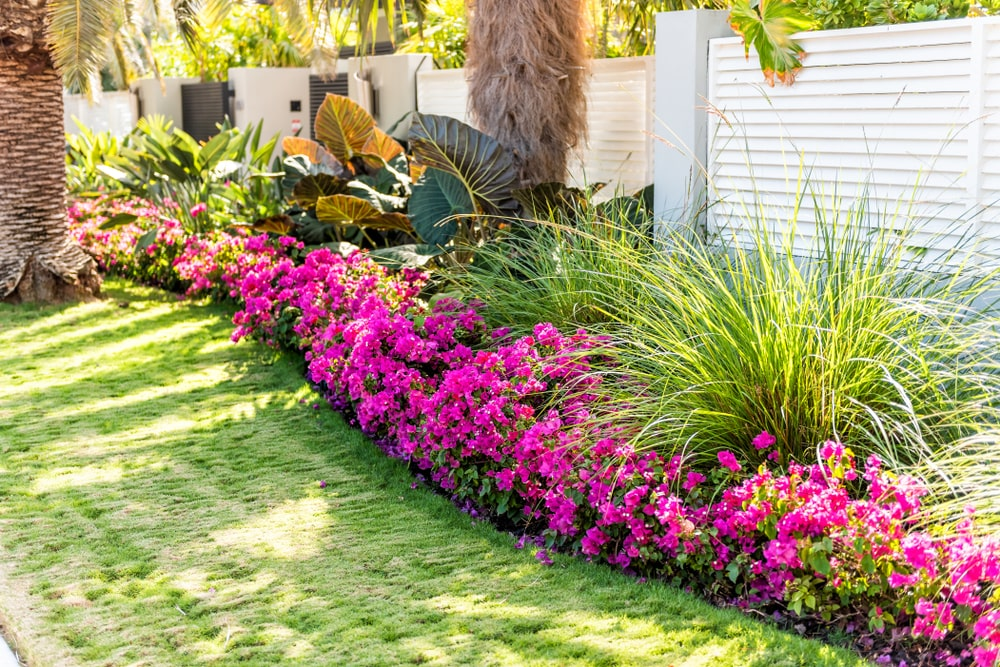 Landscaping in Florida